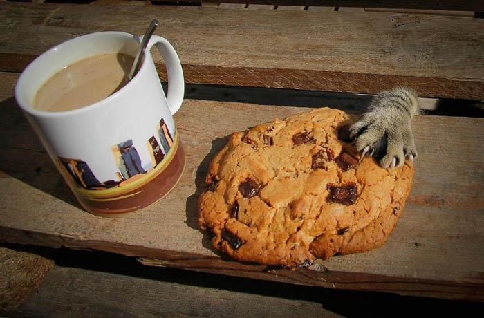 Кот, ворующий печенье.