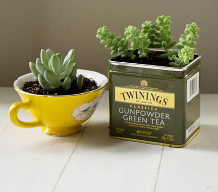 Растения, высаженные в чайную чашку и коробку.