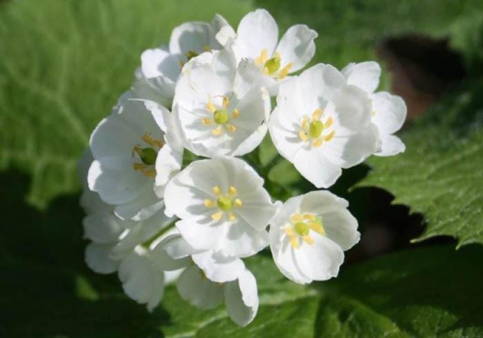 Цветок, становящийся прозрачным под дождем.