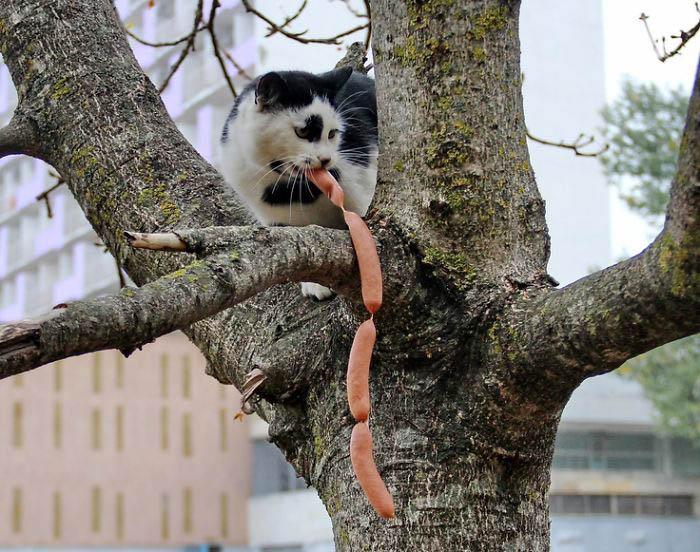 Кот и связка сосисок.