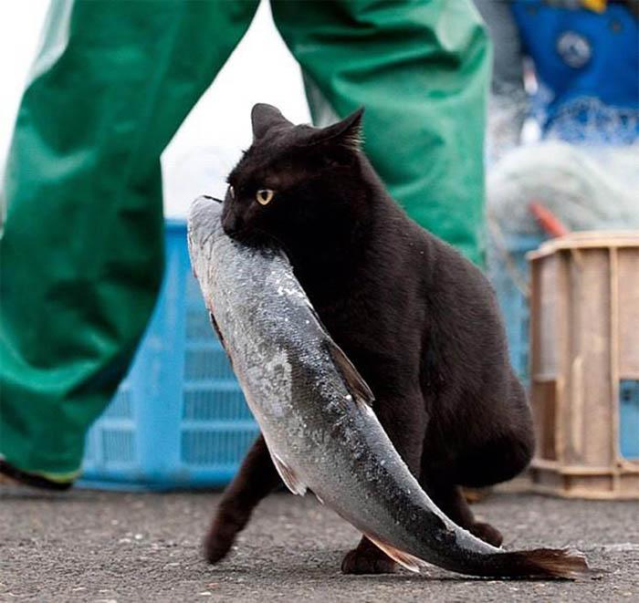 Кот, ворующий рыбу.