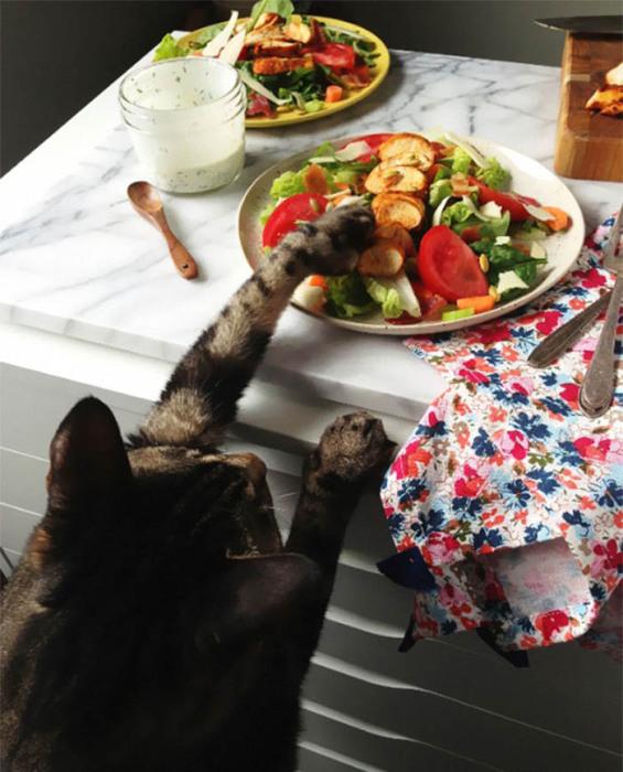 Кот, снимающий пробу с салата.