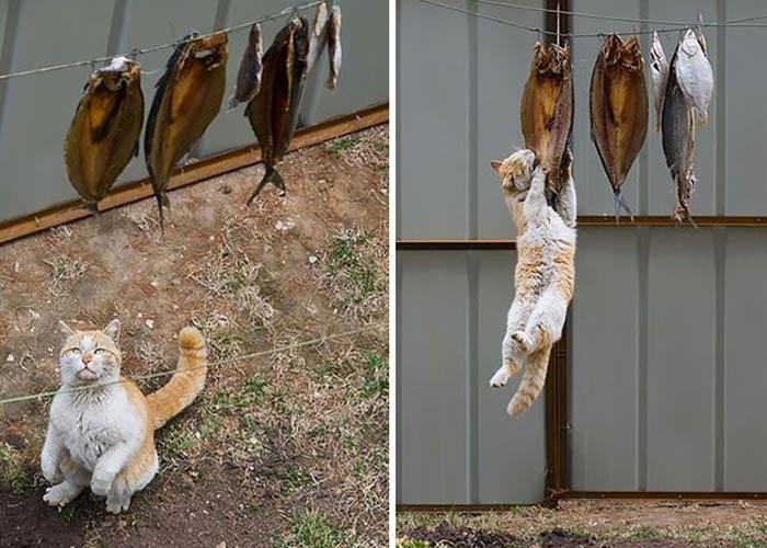 Кот и копченая рыба.