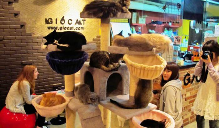 Кафе с котиками.
