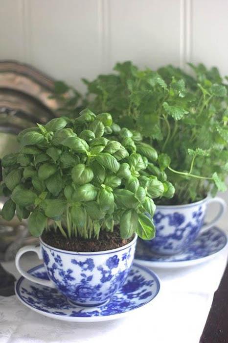 Травы в красивых чашках.