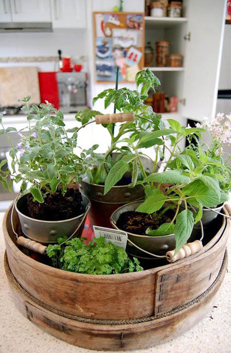 Миниатюрный сад на кухне.