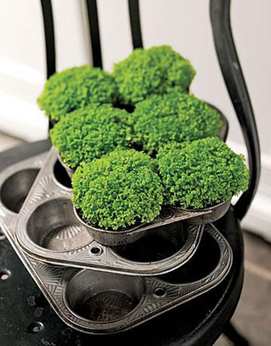 Формы для кексов для высадки растений.