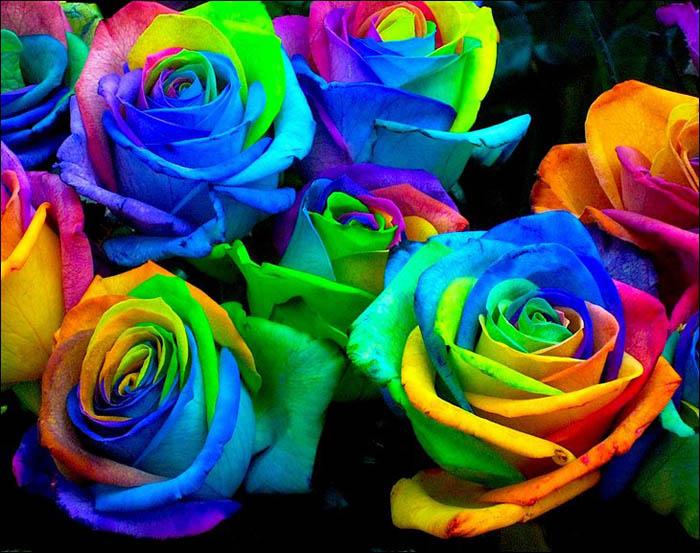 Прекрасные разноцветные лепестки.