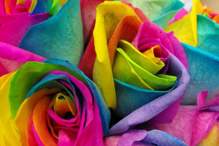Как сделать радужную розу своими руками.
