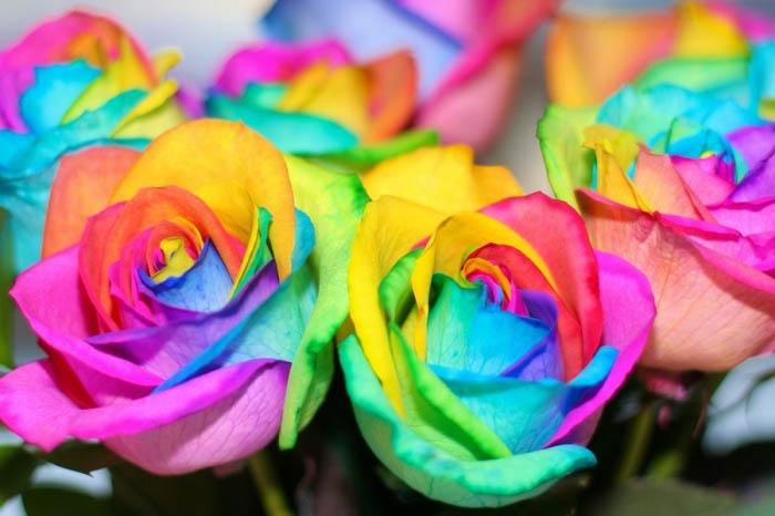 Радужные розы своими руками.