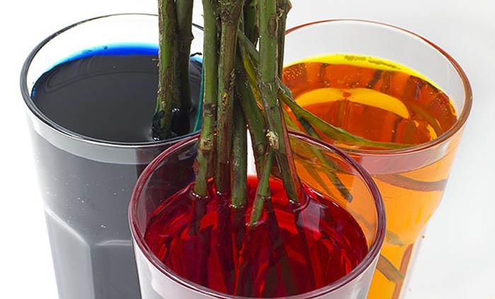 Разрезанный стебель помещается в стаканы.