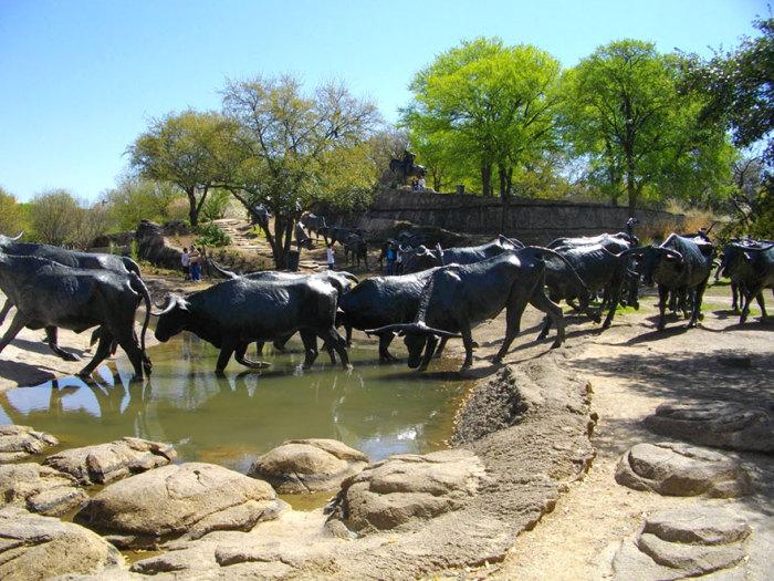 Перегон скота, Даллас, Техас, США.