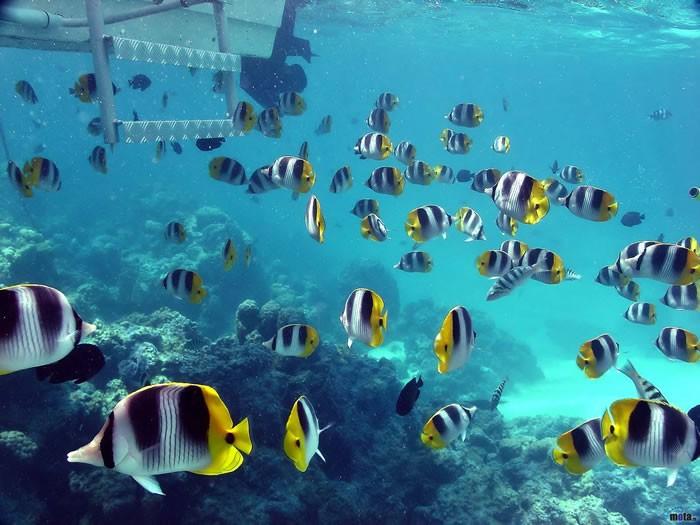 Западное Красное море, Египет.