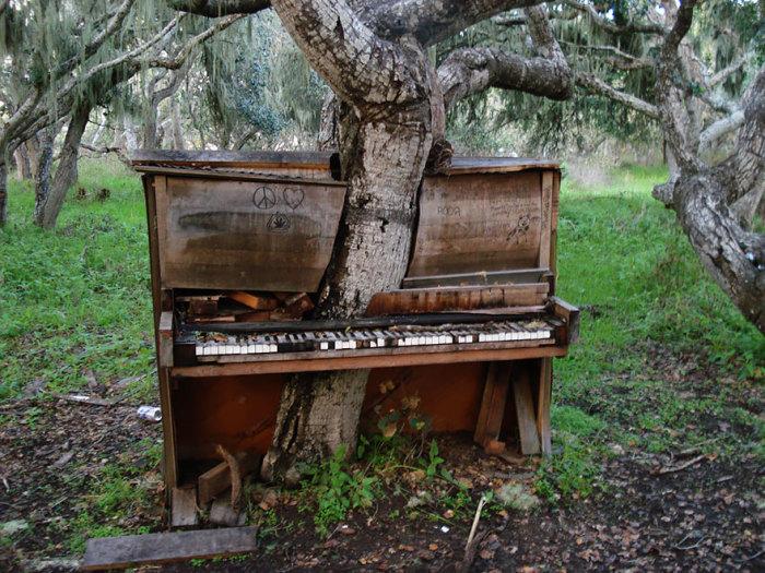 Дерево, вросшее в старое фортепиано.