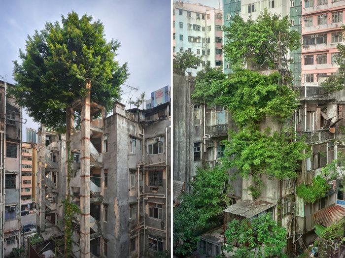 Деревья против бетона в Гонконге.
