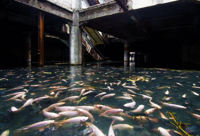Заброшенный торговый центр в Бангкоке.