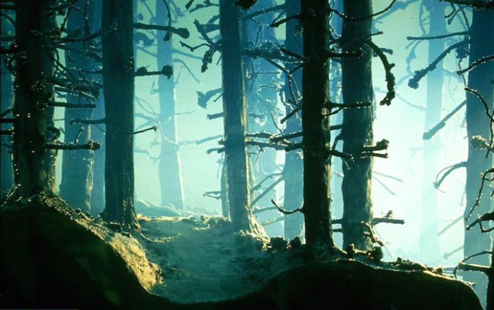 Мини-инсталляции от немецкой художницы.