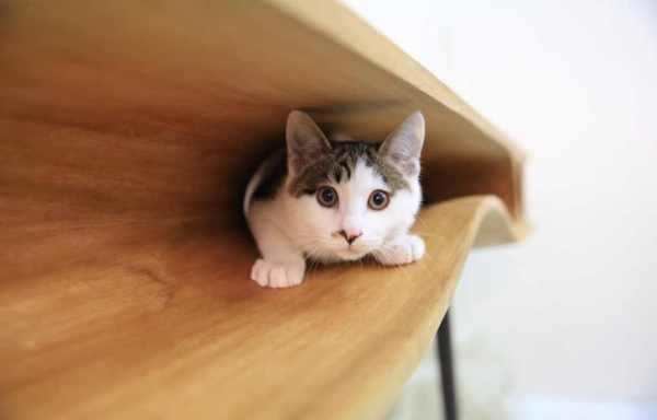 Стол CATable - настоящий кошачий рай.