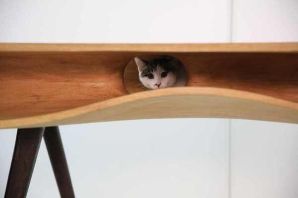 Оригинальный стол CATable от Ruan Hao.