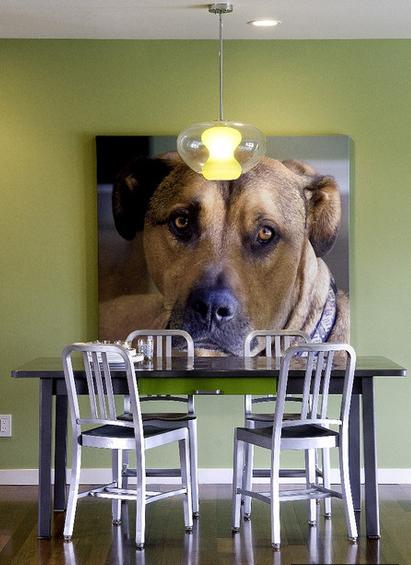 Портрет домашнего любимца в интерьере от Jennifer Kesteloot.