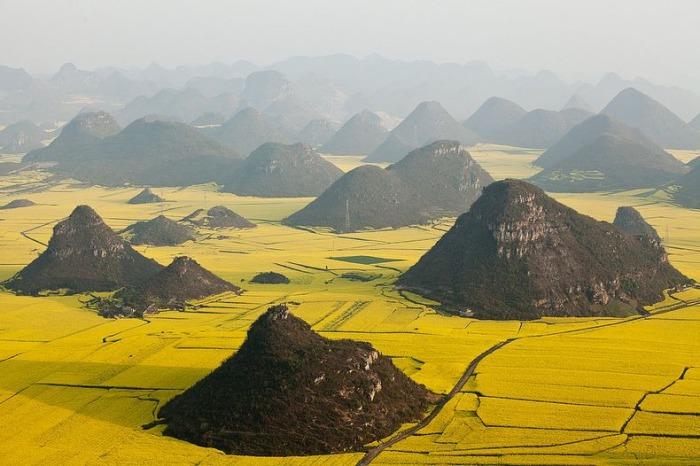 Рапсовые поля, Китай.