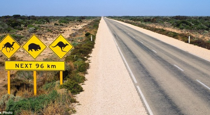 Пересекая дорогу, животные наносят вред автомобилям.