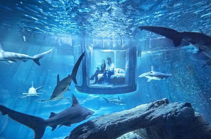 Подводная спальня в парижском океанариуме.