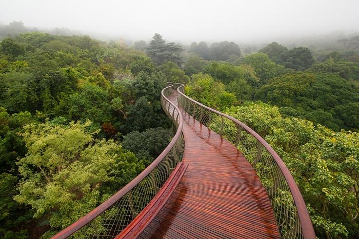 Boomslang walkway - деревянный настил в ботаническом саду.