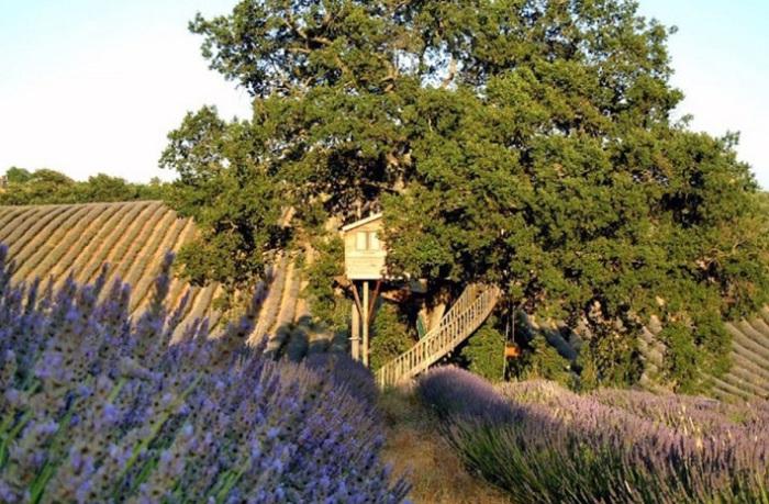 Домик на дереве посреди лавандовых полей.