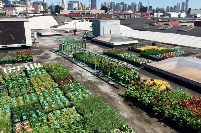 Для вертикального сада площадью 112 кв. метров понадобилось 3200 саженцев.
