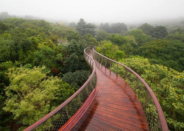 Мост Boomslang walkway в Национальном ботаническом саду ЮАР.