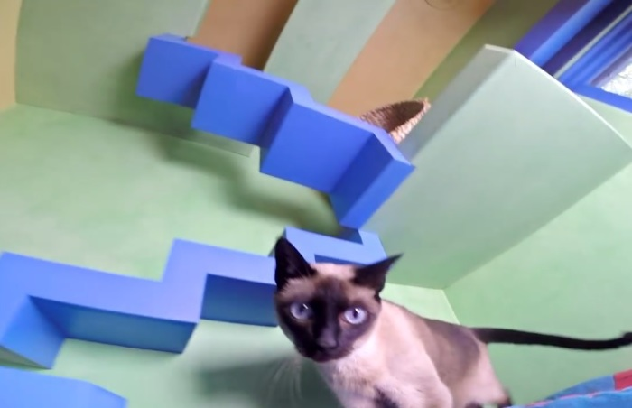Многочисленные ступеньки предназначены для перемещения кошек.