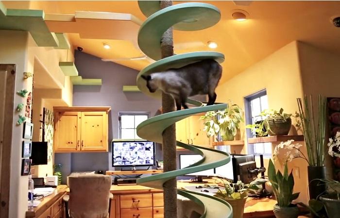 Спираль, по которой бегают кошки.