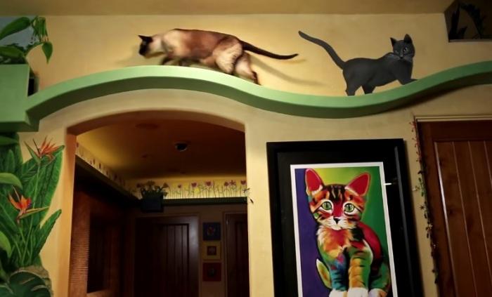 Переход для кошек под потолком.