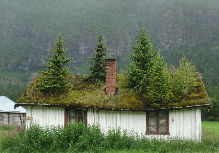 Экокрыши улучшают микроклимат в доме.