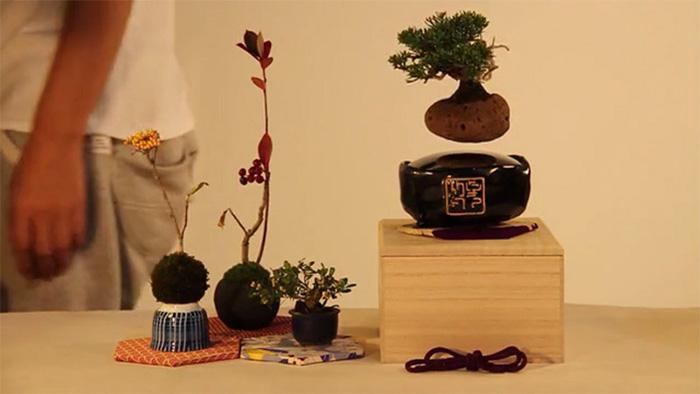 Левитирующий бонсай - разработка японских дизайнеров.