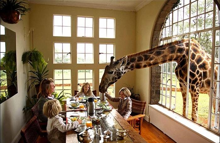 Отель с жирафом.