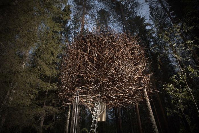 Treehotel, сделанный в виде «Птичьего гнезда».