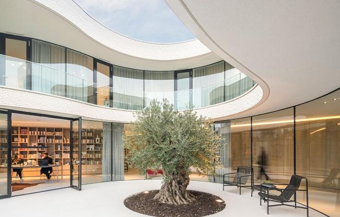 Оливковое дерево как центр всего дома.