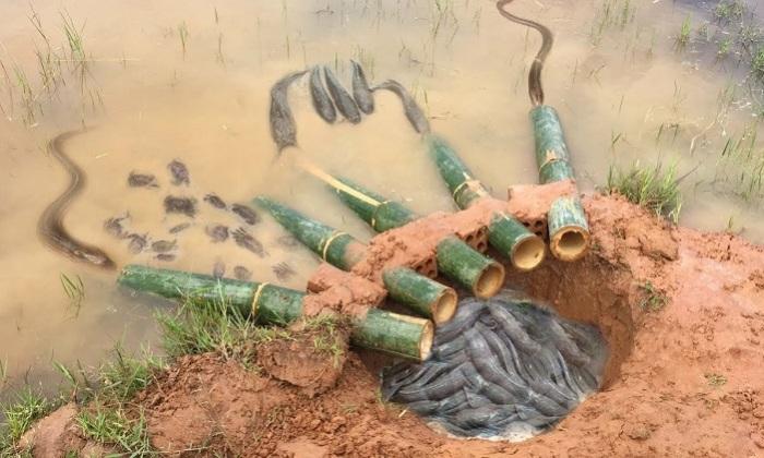 Элементарная ловушка для рыб.