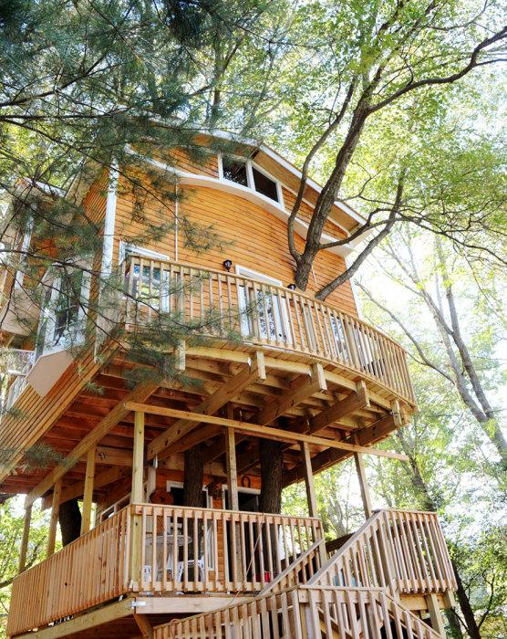дом на дереве высотой 12 метров.