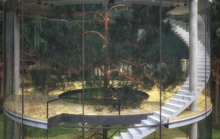 Дом, построенный вокруг дерева.