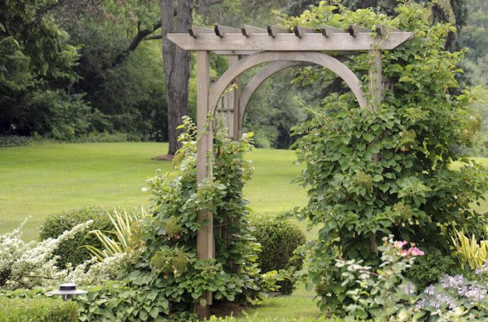 Деревянное перекрытие, которое служит достойным украшением загородного участка и выполняет роль опоры для винограда.