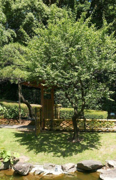 Для любителей экостиля подойдет деревянный свод, который идеально впишется в ландшафтный дизайн.