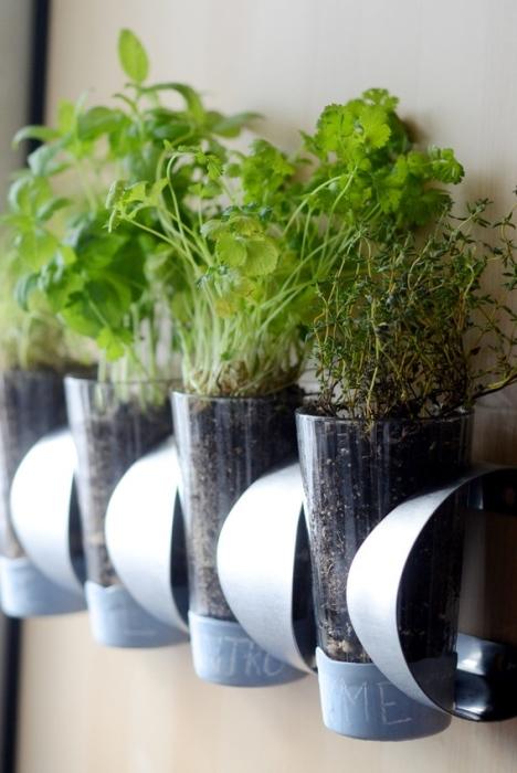 Для рассады полезных трав и растений можно использовать обычные стеклянные стаканы, которые сегодня можно купить в любом магазине.