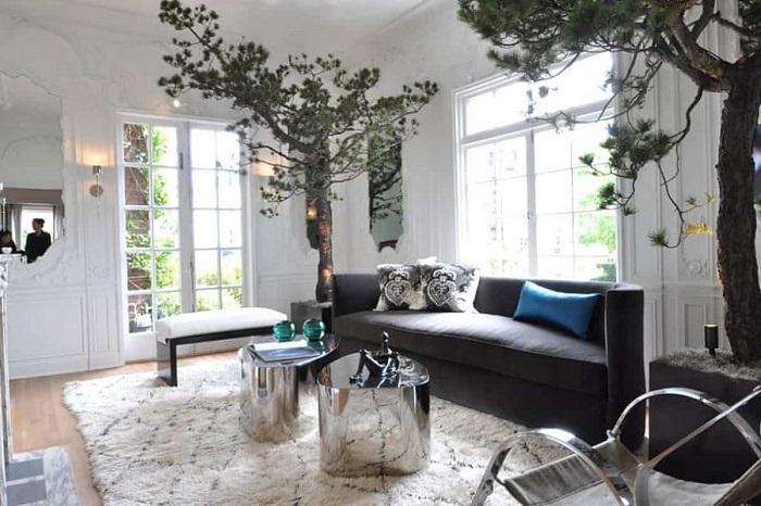 Можжевельник - светолюбивое неприхотливое растение, которое не требует особого ухода и специального микроклимата.