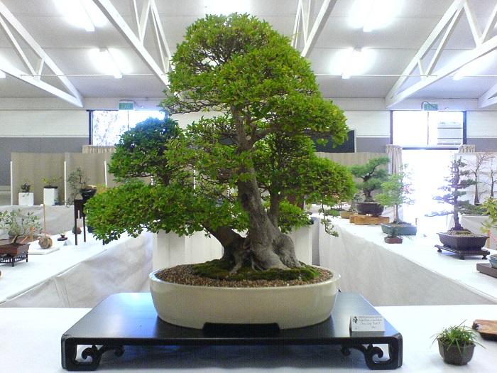 Бонсай – растение, которое поможет создать креативную атмосферу в традиционном интерьере.