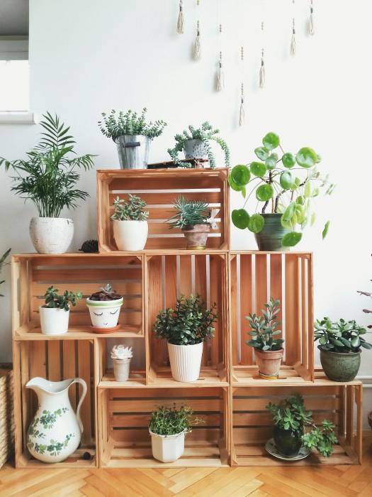Фантастическая настенная композиция из деревянных ящиков и живых растений.