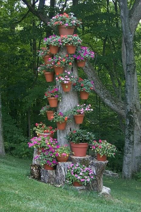 Старое дерево можно успешно использовать как «подставку» для цветочных горшков.