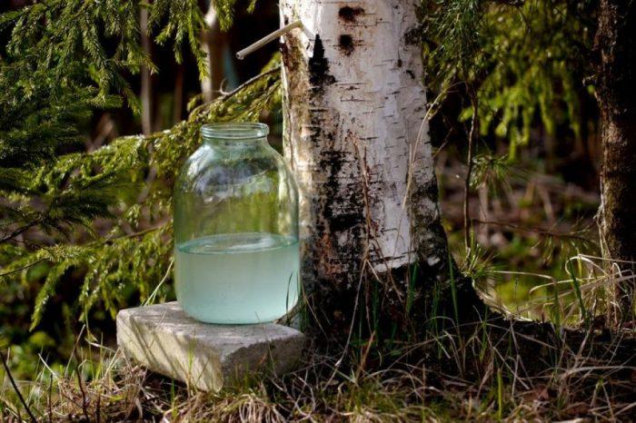 Берёзовый сок широко использовался в качестве напитка в СССР.